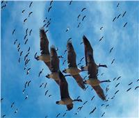 فيديو| البطوطي: توقف محطات الطاقة خلال عبور الطيور المهاجرة «قمة في التحضر»