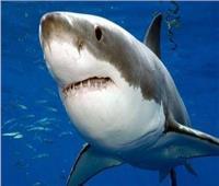 بيئيون يحذرون.. بعض لقاحات كورونا تستلزم قتل نصف مليون من «أسماك القرش»