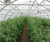 الزراعة و3 جهات دولية يطلقون حملة للوقاية من كورونا