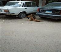 صور| قمامة وكلاب ضالة في كوبرى القبة تهدد حياة المواطنين
