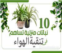 إنفوجراف| 10 نباتات منزلية تساهم في تنقية الهواء