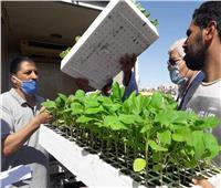 صور  توزيع شتلات 6 محاصيل مجانا على مزراعي جنوب سيناء