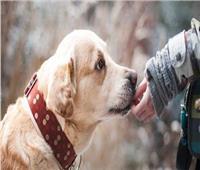 رفضت ترك صاحبها بعد وفاته.. الكلاب تقدم درساً جديداً فى الوفاء
