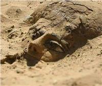 منها «مقبرة فريدة»   أبرز الاكتشافات الأثرية في عام 2020