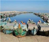 صور | بحيرة البردويل.. تطوير دائم وأسماك معدة للتصدير