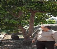 «الزراعة» فحص 422 رسالة تقاوي وبذور محاصيل خلال أكتوبر