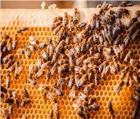 «الزراعة» تطلق مهرجان العسل المصري بحديقة الأورمان