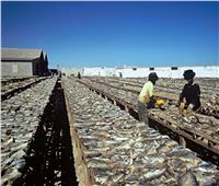 استئناف الصيد في موريتانيا بعد توقف لمدة شهر