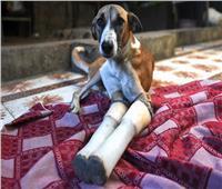 «الكلبة روكي».. كفاح الإنسانية من الهند إلى بريطانيا