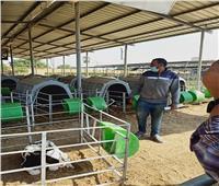 «الزراعة» تصدر 395 ترخيص تشغيل لمشروعات الثروة الحيوانية