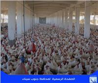 بحث إنشاء مزرعة متكاملة للإنتاج الحيواني والداجن بطور سيناء