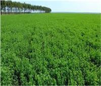 7 نصائح للمزارعين يجب مراعاتها للاستخدام الآمن لمبيدات الحشائش