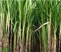 وزير الزراعة يبحث خطة النهوض بقصب السكر