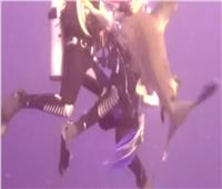 خبير بحري يكشف مفاجأت في أسباب زيادة هجمات القروش بالبحر الأحمر