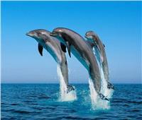 يوجد بها 5 آلاف دولفين.. «محمية صمداي» طبيعة ساحرة بالبحر الأحمر