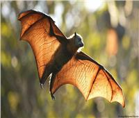 «المرأة الخفاش» تحذر العالم من «كوفيد – 2»