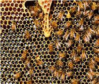 رغم فوائده العظيمة.. احترس من أضرار العسل