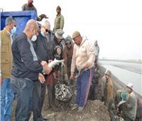 «الزراعة» تفتتح موسم الصيد بكفر الشيخ | صور