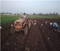 زراعة المنوفية:87300 فدان إجمالي المساحات المزروعة بالقمح في المحافظة
