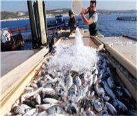 فيديو| تنمية الثروة السمكية: طرح إنتاج المزارع لخفض الأسعار