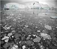 20 تحت الصفر.. لعبة شطرنج على سطح الجليد| فيديو