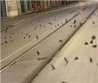 مجزرة للطيور في إيطاليا ليلة رأس السنة