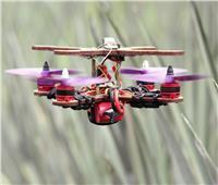 باحثون يكتشفون استخدامًا جديدًا لـ«الأناناس» في صنع الطائرات