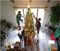 رأس السنة «المنزلي».. أكلات وصور بجوار شجرة الكريسماس فقط