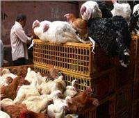 حظر تداول الدواجن الحية بأسواق أسوان