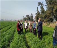 «الزراعة» تتابع محصول القمح والفول وتقاوي الإكثار بالقليوبية والمنوفية