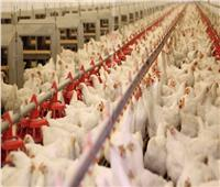 تحصين 1.8 مليون طائر ضد «أنفلوانز الطيور» خلال شهر