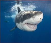«سمكة قرش» ضخمة تقضم فخذ سائح بأستراليا