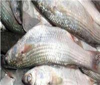 «أمن القليوبية» يضبط شحنة أسماك فاسدة قبل ترويجها