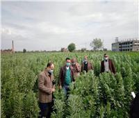 الحملة القومية لمحصول الفول البلدي والعدس تقدم توصياتها لمزراعي دمياط