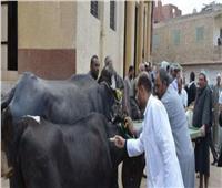 «الزراعة» تحصين 400 الف رأس ماشية ضد الأمراض الوبائية خلال شهر