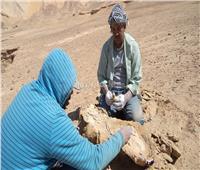 «تعود لأكثر من 70 مليون سنة».. اكتشاف عظام أكبر سلحفاء بحرية في مصر| صور