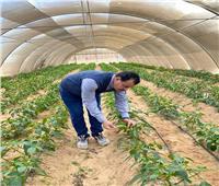 رئيس «الوادي الجديد» يتفقد مزارع القمح والصوب الزراعية بالجامعة