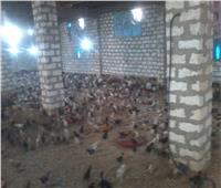 مثلث التنمية في قرى جنوب أسيوط.. صور