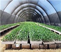 فيديو| زراعة الوادي الجديد: «الصوب» تعظم إنتاج الخضر والفاكهة