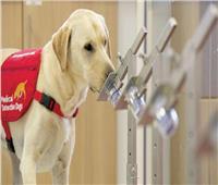 الإمارات تستخدم الكلاب للكشف عن فيروس كورونا