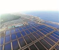 افتتاح أكبر مزرعة سمكية في العالم ببورسعيد قريباً