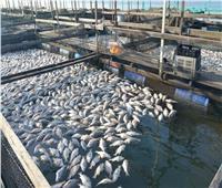 أسعار الأسماك في سوق العبور اليوم.. والماكريل بـ 25 جنيهًا