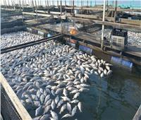 انخفاض أسعار الأسماك في سوق العبور اليوم 25 يناير