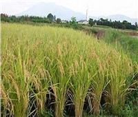 الزراعة: اعتماد خطة إستراتيجية للنهوض بالمحاصيل التي بها فجوة