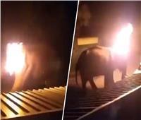 شاهد بالفيديو| احتراق فيل يبلغ من العمر 40 عاما في الهند