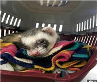 معجزة  فأر ينجو من الموت بعد دخوله الغسالة لمدة 100 دقيقة