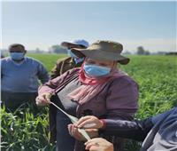 زيارة ميدانية لـ«علماء القمح» لمتابعة المحصول بالبحيرة.. صور