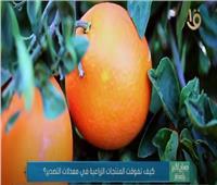 كيف تفوقت المنتجات الزراعية المصرية في معدلات التصدير؟.. فيديو