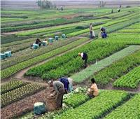 نقيب الفلاحين: مبادرة الرئيس لتطوير الريف تخدم أكثر من نصف الشعب المصري