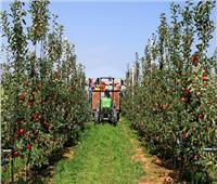 6 توصيات لمزراعي التفاح والكمثري يجب إتباعها لمكافحة الآفات